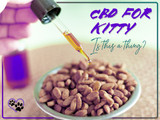 CBD for Kitty – Is This a Thing?