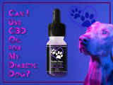 Can I Use CBD Oil for My Diabetic Dog?