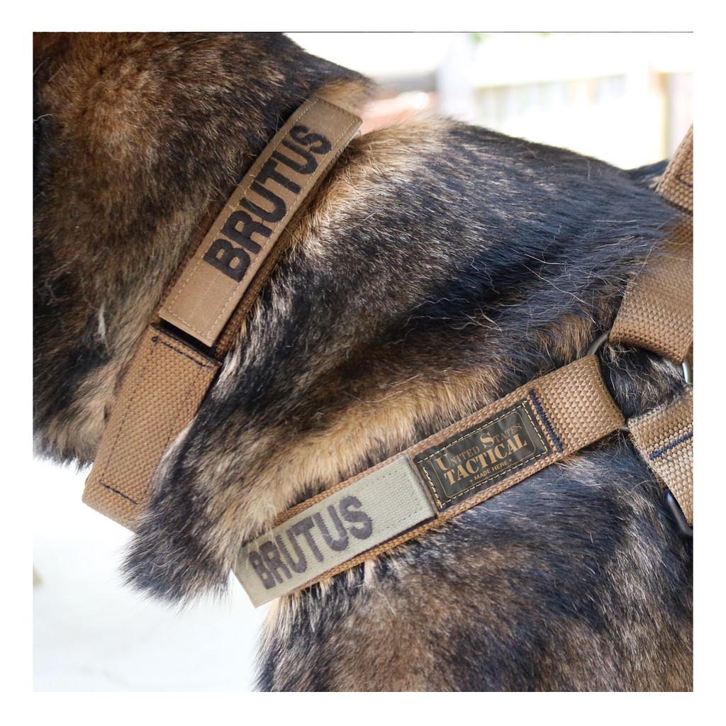 Collar - Coyote
