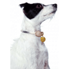 collar shown on a white and black dog