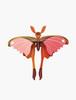 studio rood pink comet butterfly