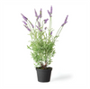 French Lavender Drop-In