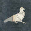 white and grey bird on a black/charcoal background