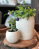 ribbed speckled ceramic pot