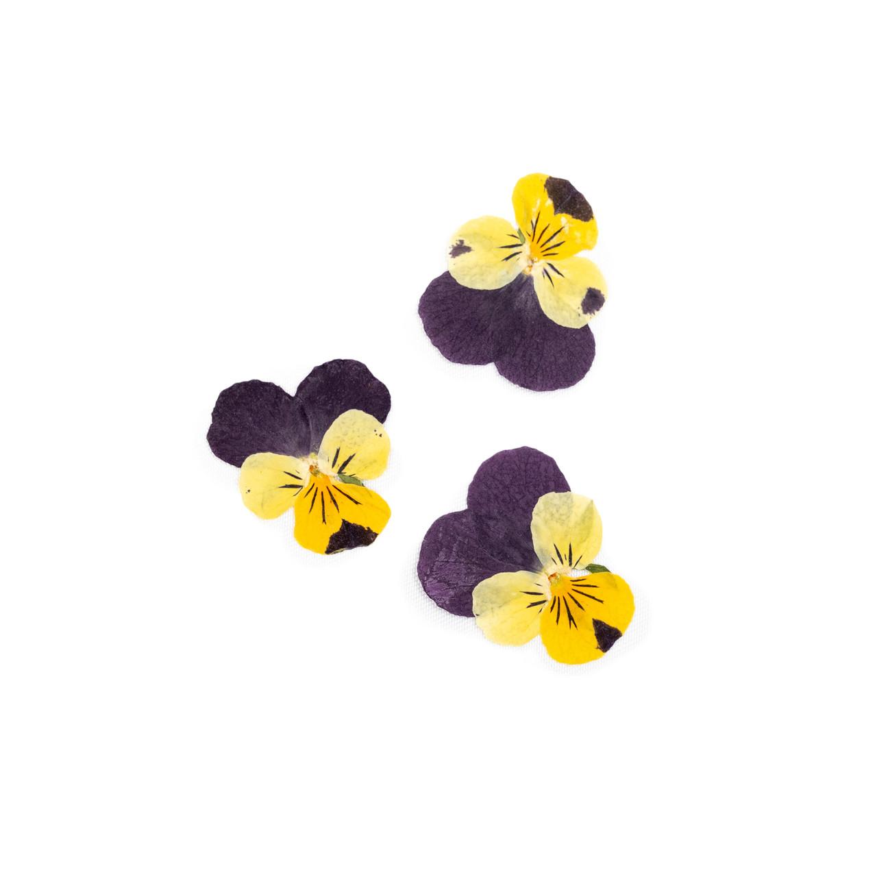 Pressed Botanical - Pansy Flowers