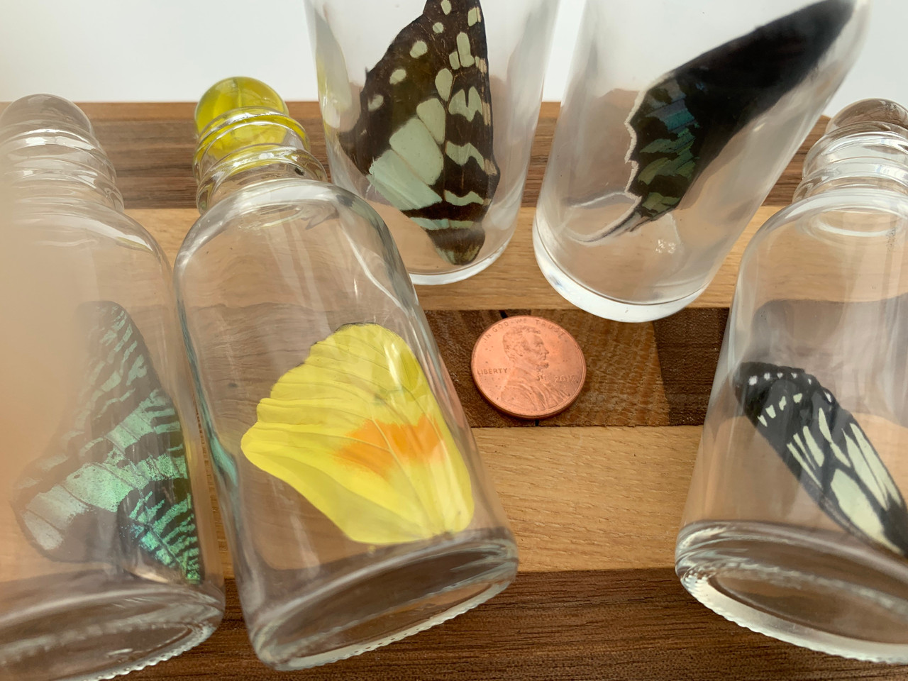 Hippie Decor Bottled Butterfly Wing Boho Decor Real Butterfly Wing Wings in a Jar Magical Keepsake Magical Fairy Wing Jarred Fairy