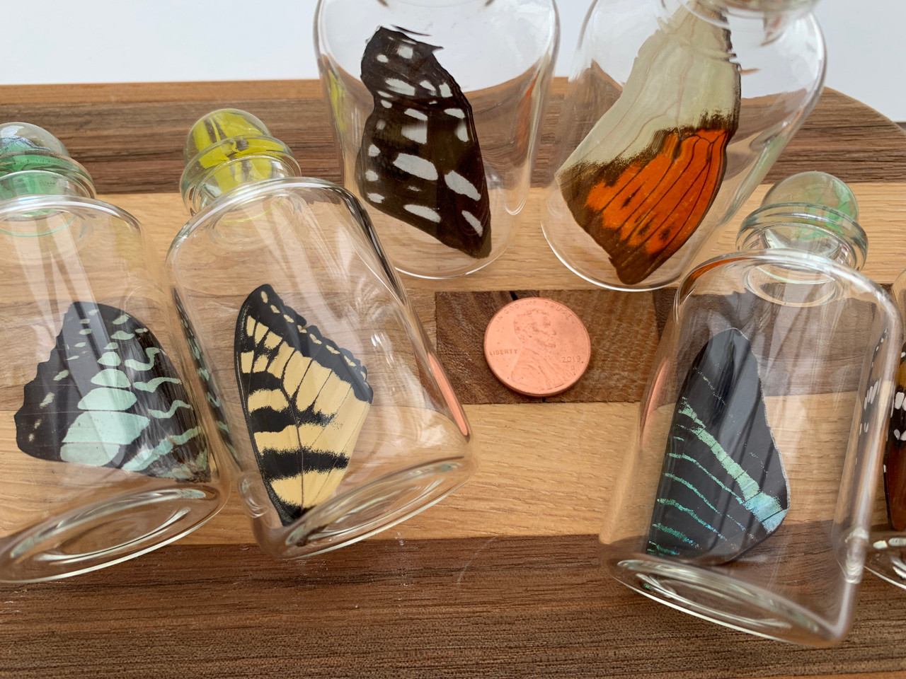 Medium Real Butterfly Wing in a Jar with Marble Closure - Fairy Bottle