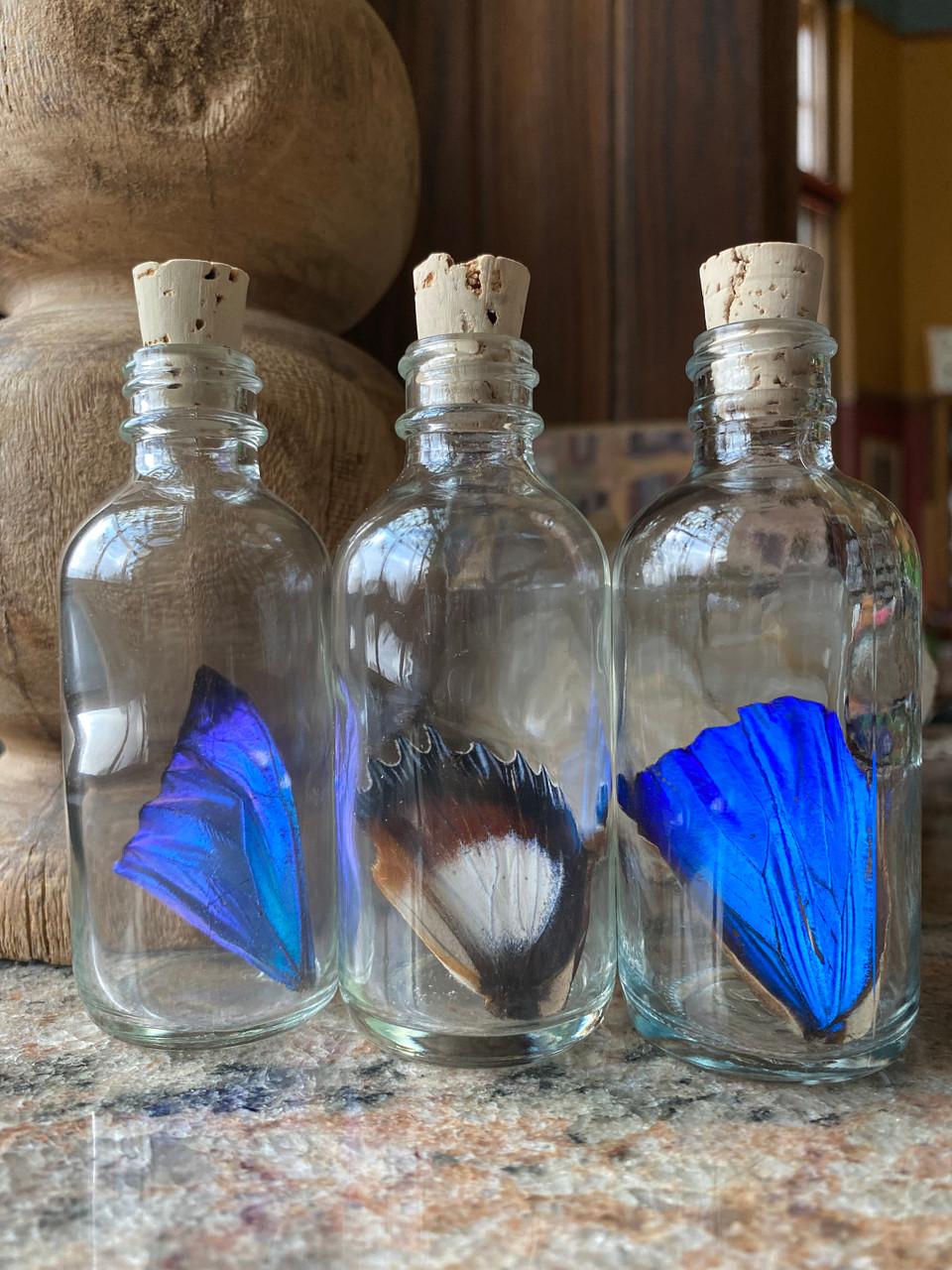 Real Butterfly Wing in Bottle XLarge
