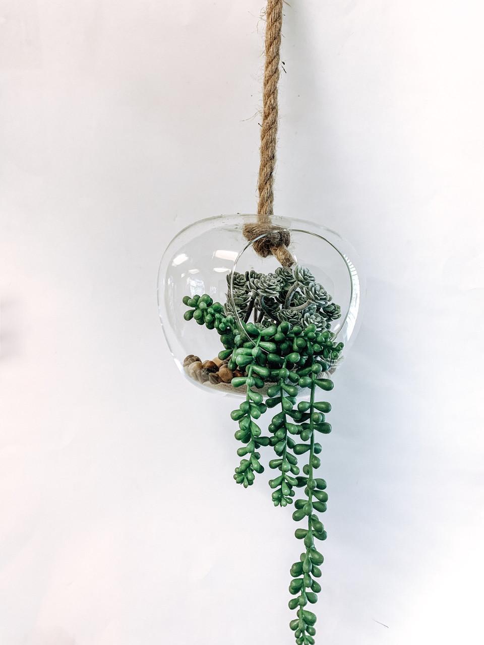 dom shaped hanging terrarium