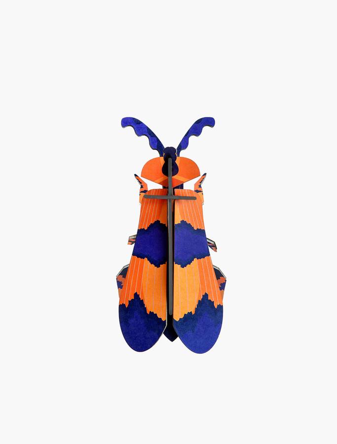 studio roof winged beetle