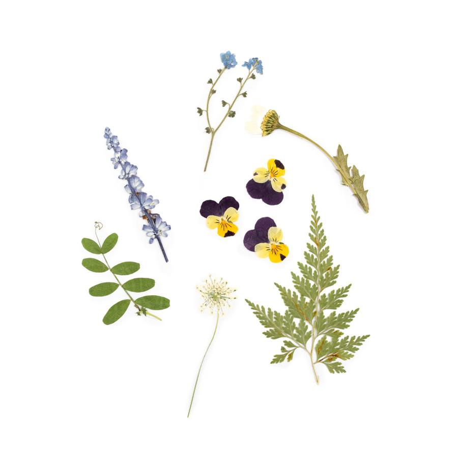 Pressed Botanicals