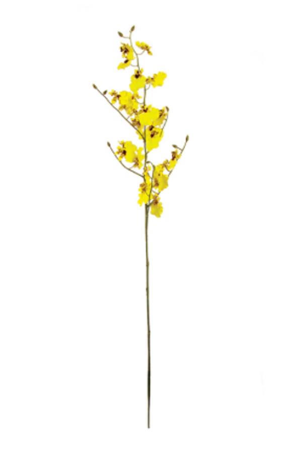 """Oncidium Orchid Stem - 36.5"""""""