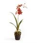 Dancing Orchid Drop-In