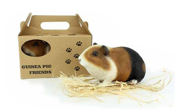Guinea Pig in Travel Pack