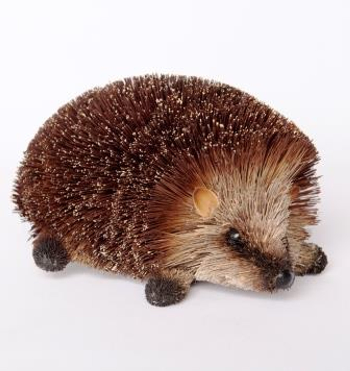 Beautifully Handcrafted, Handmade and all Natural Hedgehog Crawling. Medium Size (15cm)