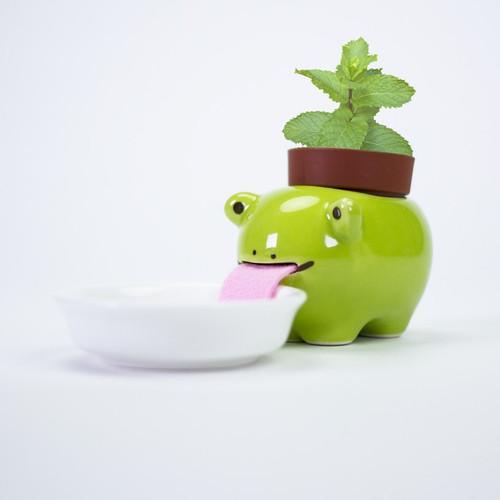 Peropon Mint Frog Licking Animal Plant