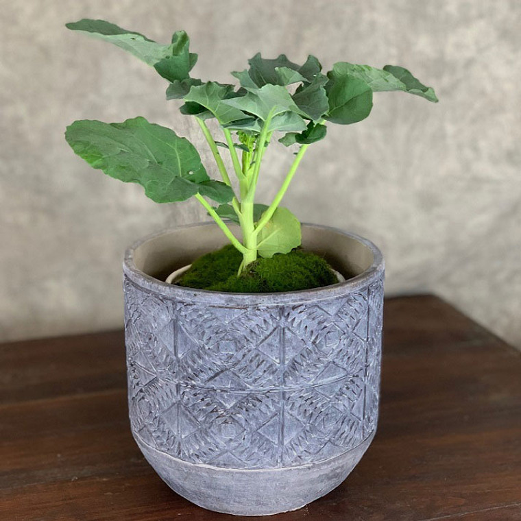 Aboriginal Planter - Medium