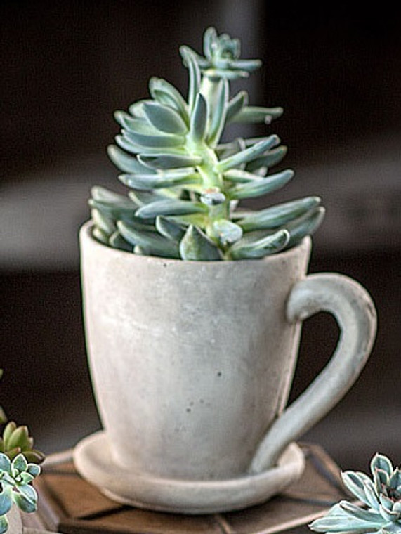 Large Cement Tea Mug Planter