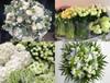 Florist's Choice - White