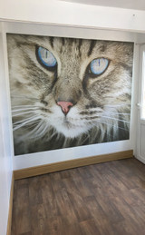 The new feature wall of Ayudamist Cattery