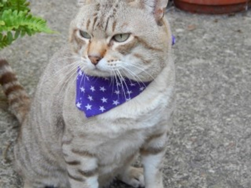 Unique and exclusive to Elliots Petwarehouse are Elliots cat bandannas, Available in a chouce of colours and designs these bandannas are simple to fit and procide easy breakaway release  in an emergency.  Do not have to be attached to cat collar as many cat bandannas do.