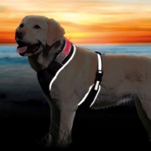 A comfortable to wear soft dog harness with safety flash light  Robust mesh material   Fully adjustable belly area