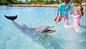 Atlantis Dolphin Cay Shallow Water Interaction + Beach   Low Season