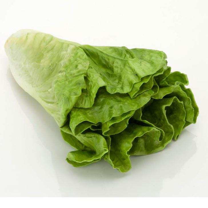 Lettuce - Head - Large