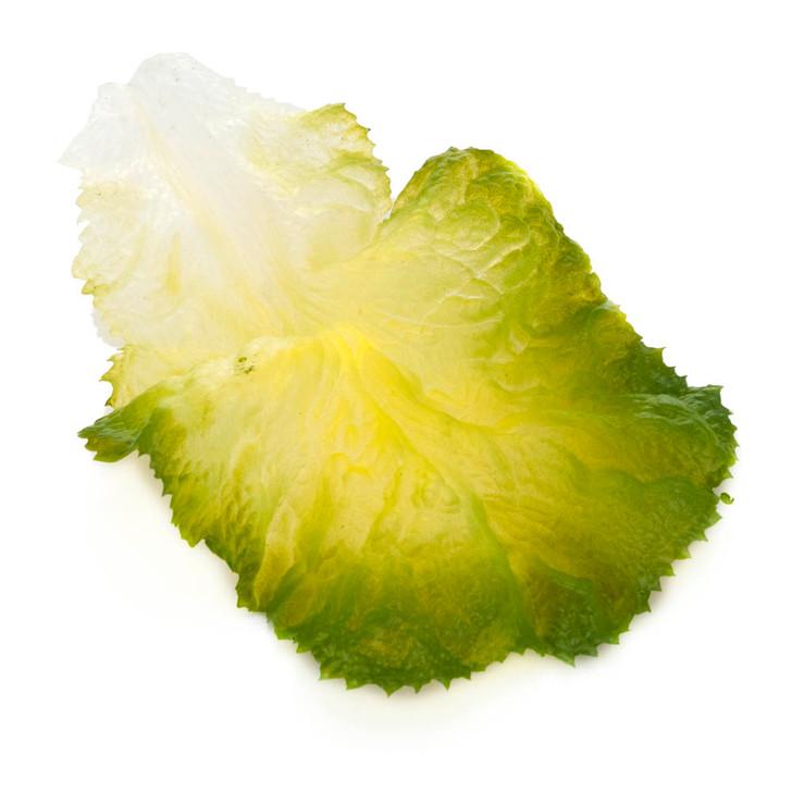 Lettuce Leaf - Green