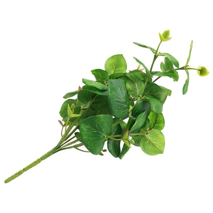 Eucalyptus Herb Stem