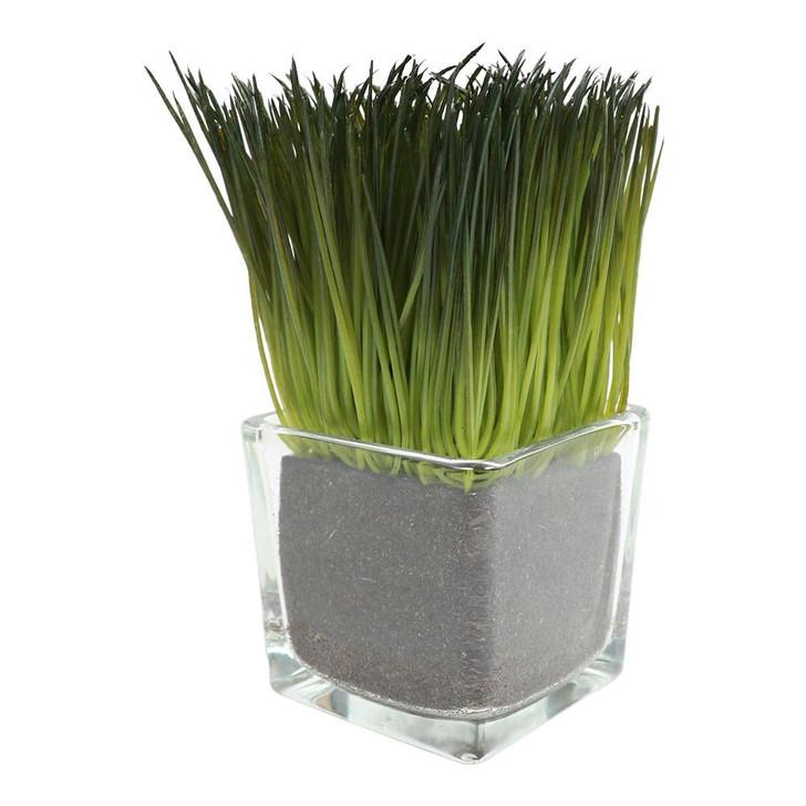 Lemon Grass in Glass Vase