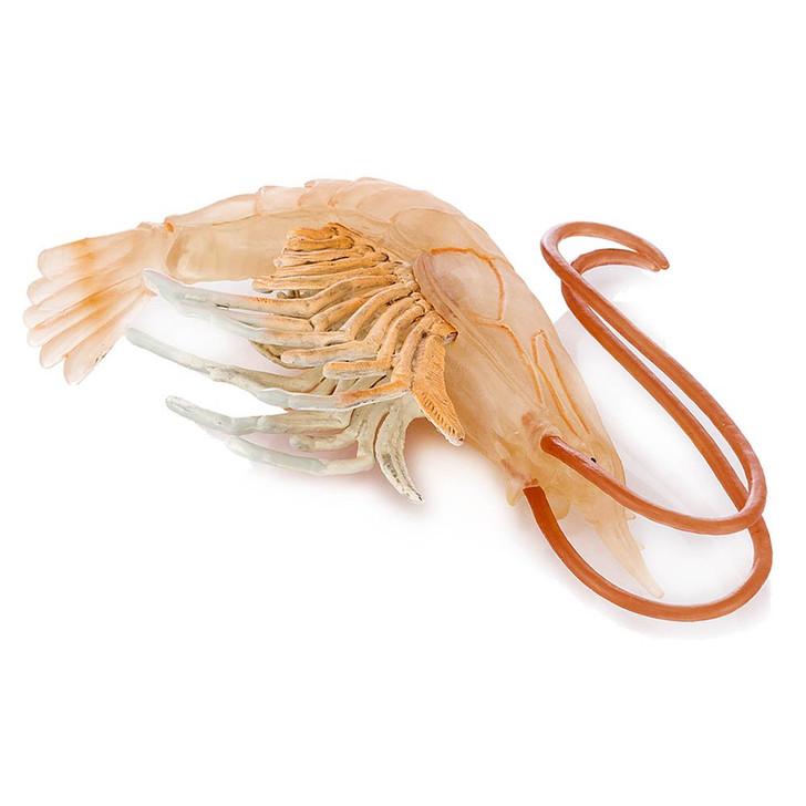 Caramote Sweet Prawn Shrimp