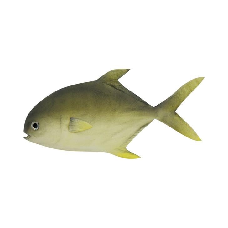 Soft Pomfret Fish