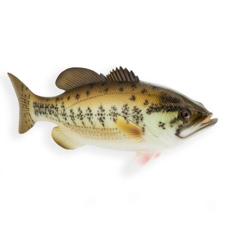 Speckled Bass Fish