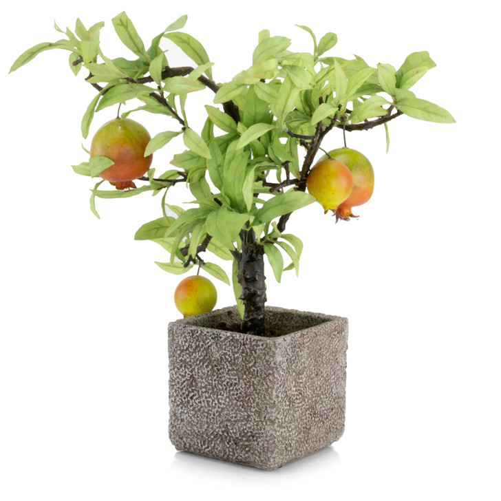Potted Baby Pomegranate Tree