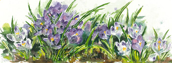 A watercolor painting of Crocus flowers by Julia Swartz