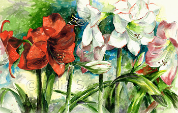 A watercolor painting of white Apple blossom and red Amaryllis flowers by artist Julia Swartz.