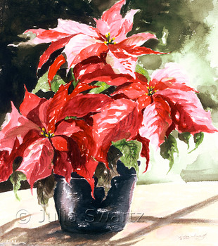 A Red Poinsettia in a black flower pot watercolor painting by Julia Swartz.