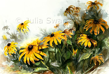 Black Eyed Susan watercolor painting by Julia Swartz
