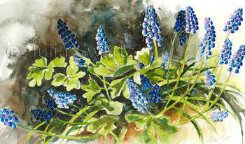 A watercolor paintings of Bluebells flowers, also know as  grape hyacinth, by artist Julia Swartz