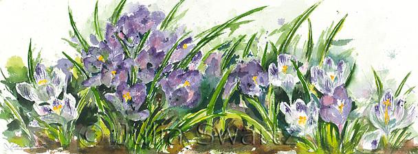 A watercolor painting of Crocus flowers by Julia Swartz