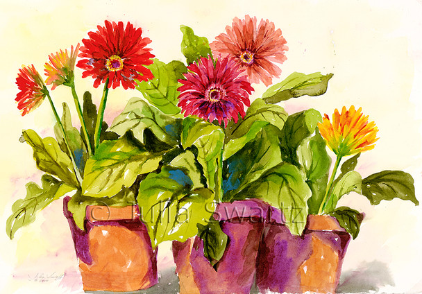 Gerbera Daisies watercolor paintings in clay pots by Julia Swartz