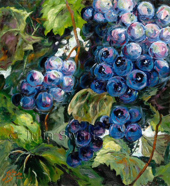On Oil Painting of blue grapes on a grape vine by Julia Swartz.