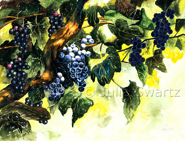 Beautiful blue concord grapes on an old grapevine painted in watercolor by Julia Swartz