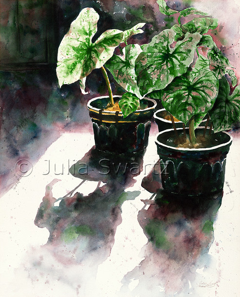 A watercolor painting of Caladiums plants in black pots by artist Julia Swartz