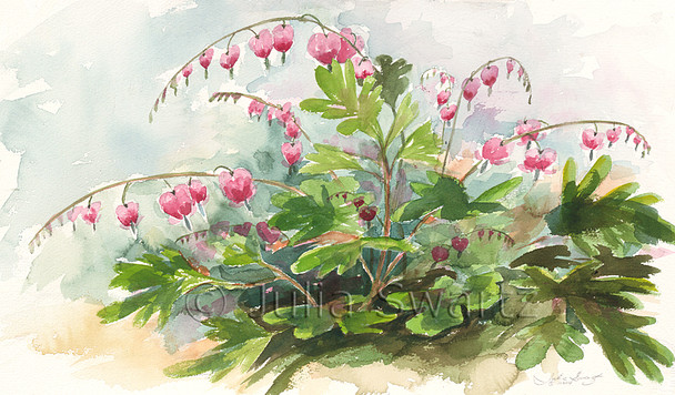 A watercolor paintings of Bleeding Hearts flowers by artist Julia Swartz