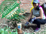 Composting With Cold Brew Coffee: Michelle Soufian