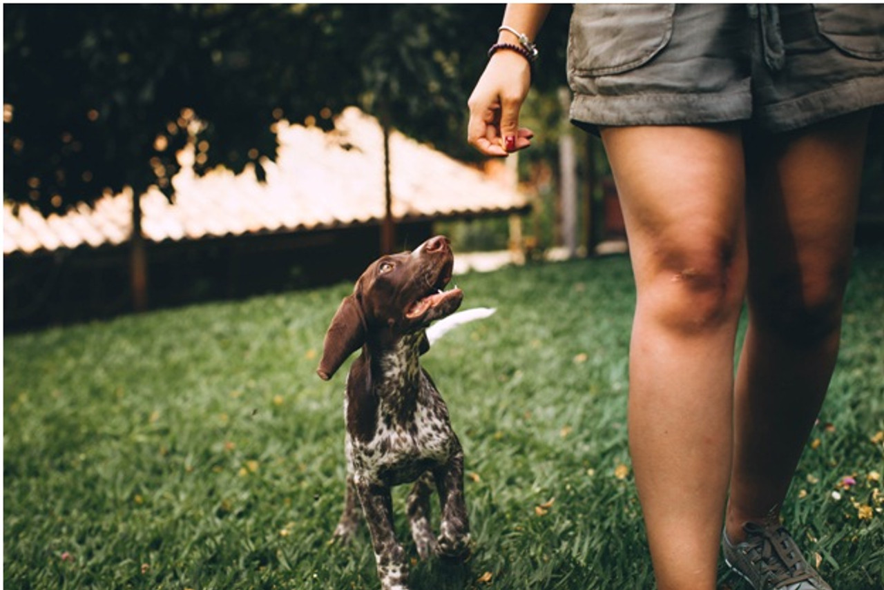 Calming Herbs For Dogs That Help Reduce Anxiety