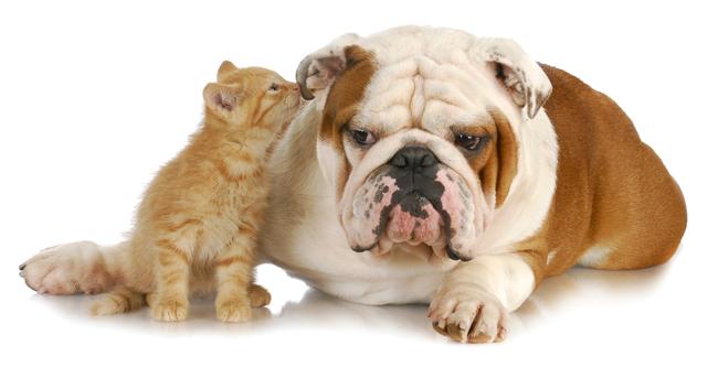 'No Evidence' of Coronavirus Spread Via Pets, American Humane Says