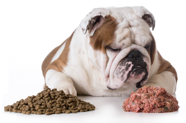 Legumes and Canine Dilated Cardiomyopathy: A look at the Bigger Picture